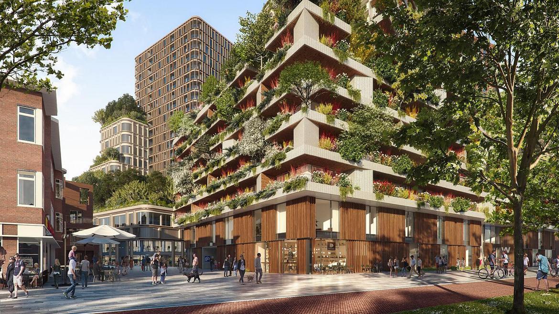 Η Ολλανδία γεμίζει πράσινες οροφές