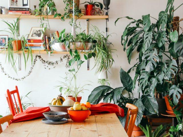 5 ανθεκτικά φυτά εσωτερικού χώρου