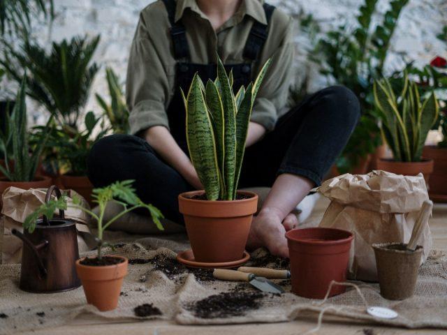 Οι Έλληνες plant lovers που πρέπει να γνωρίζεις
