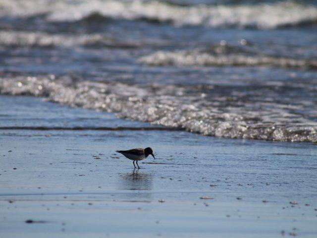 14 χώρες θέτουν ως στόχο την προστασία των ωκεανών