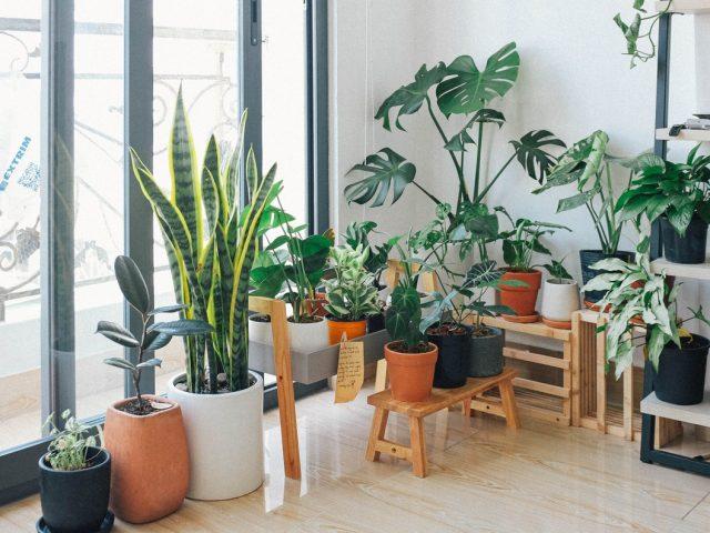 4 online καταστήματα για να παραγγείλεις τα φυτά σου