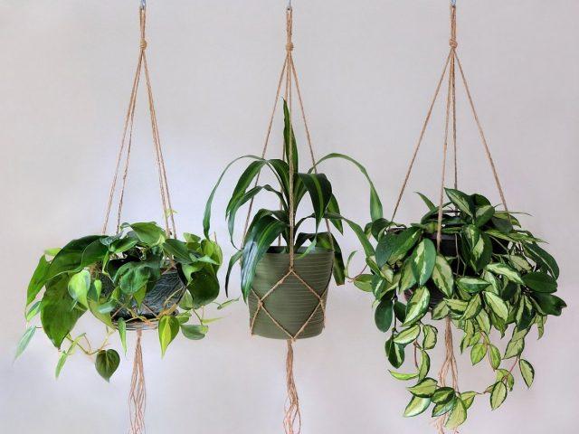 κρεμαστά φυτά