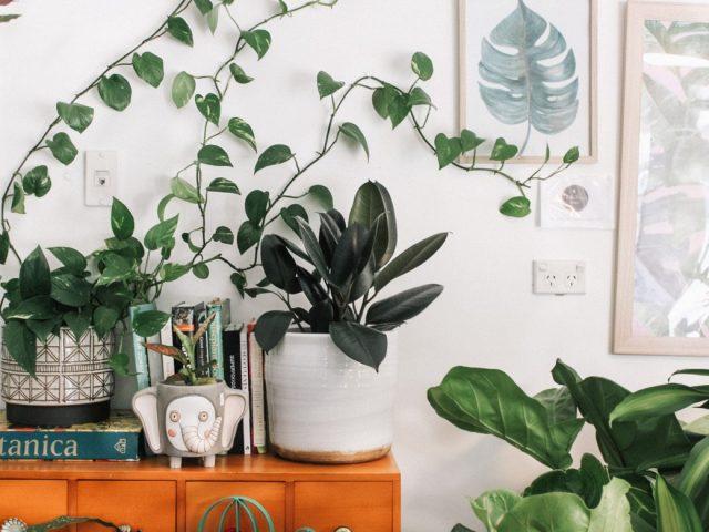 5 apps που θα σε βοηθήσουν αν ξεκίνησες να ασχολείσαι με τα φυτά