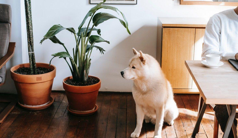 φυτά για κατοικίδια