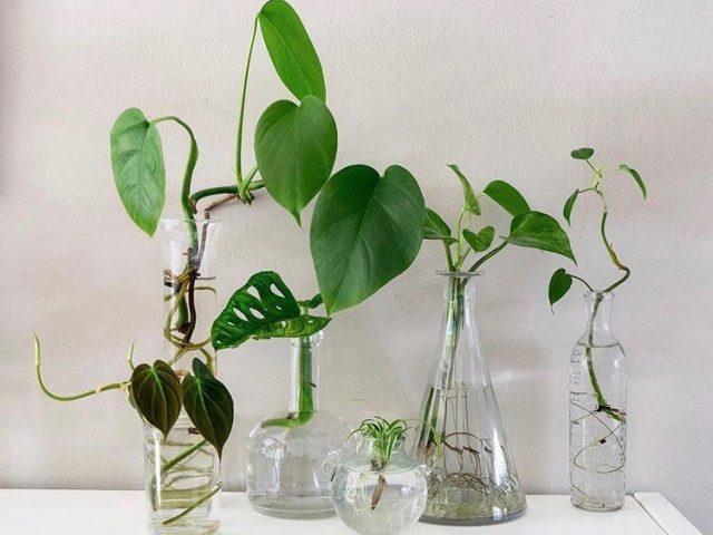 water propagation