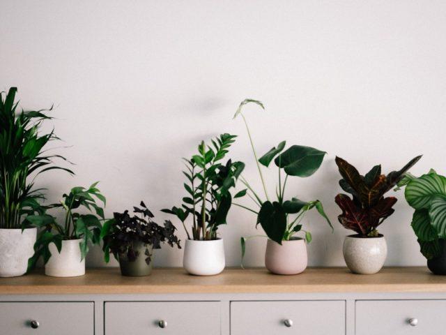 κασπώ για φυτά