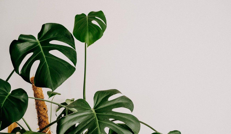 φυτά του σπιτιού περιβάλλον