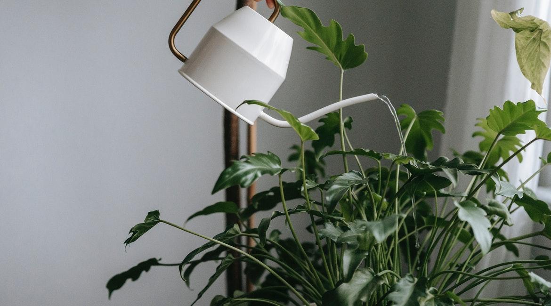 όσα χρειάζεται να ξέρεις για το σωστό πότισμα των φυτών σου