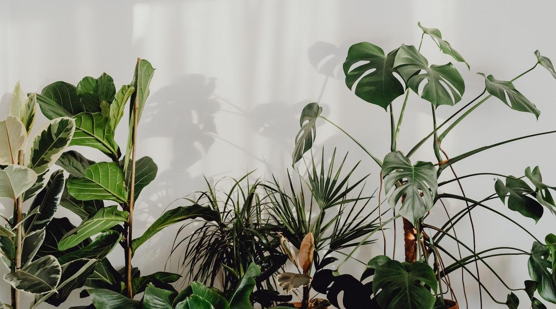 φυτά για το άγχος